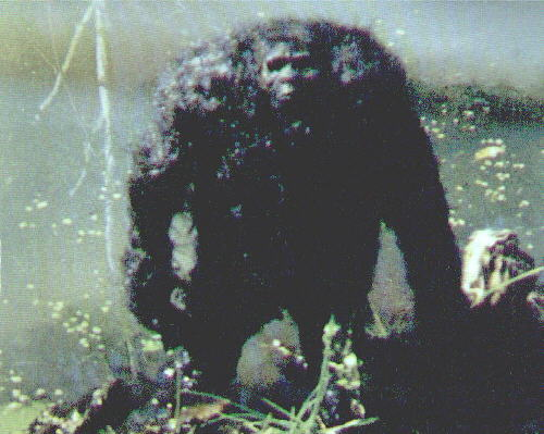 bigfoot monster